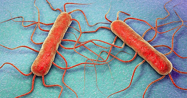Listeria monocytogenes, élelmiszer-biztonsági jelentőségű baktérium: kockázata, előfordulása, jelentősége,  a fertőzés kialakulásának a megelőzése, és a már kialakult liszteriózis kezelése