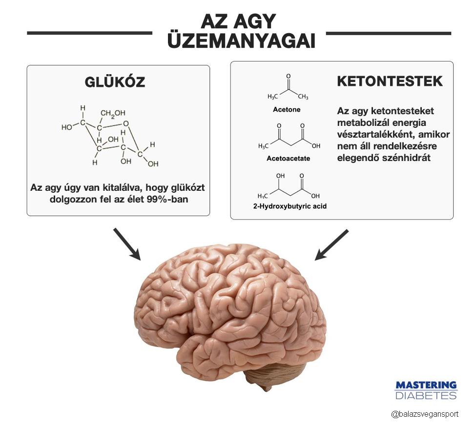 ketogén diéta agy üzemanyag