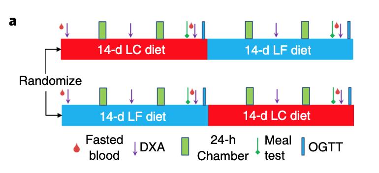 Ketogén diéta és a vegán étrend kísérlet: résztvevők szétosztása